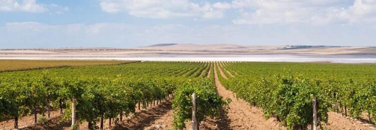 Обрезка винограда на Кубани