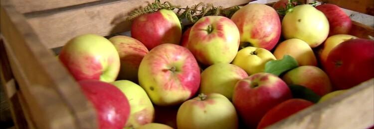 Как хранить яблоки на зиму в домашних условиях. Подготовка места для хранения