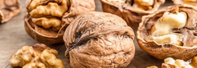 Грецкие орехи: польза и вред для организма. Лечебные свойства грецкого ореха