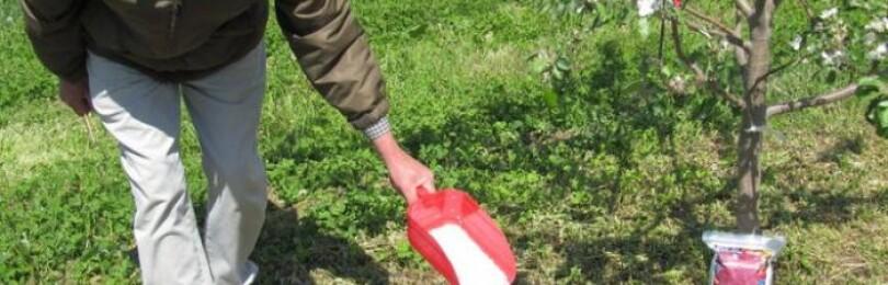 Чем подкармливать яблони весной для хорошего урожая