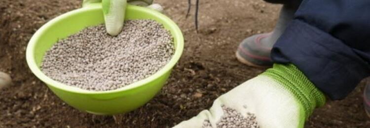 Мочевина: удобрение, применение весной на огороде