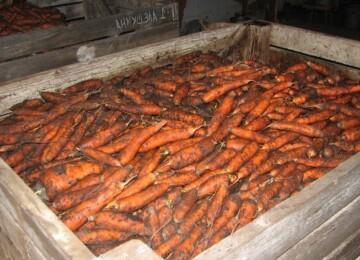 Как хранить морковь в погребе зимой. Подготовка погреба к хранению