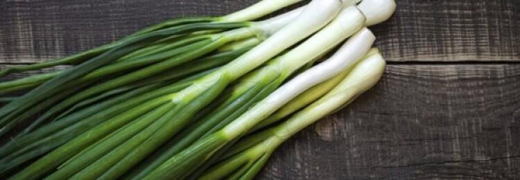 Польза и вред зеленого лука для здоровья