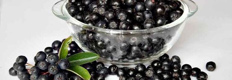 Лечебные свойства и противопоказания черноплодной рябины