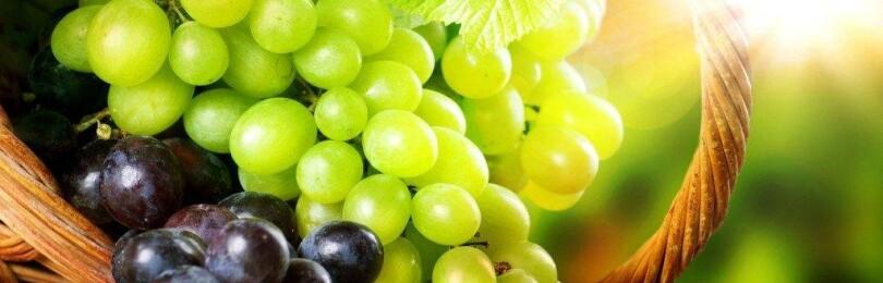 Новые сорта винограда