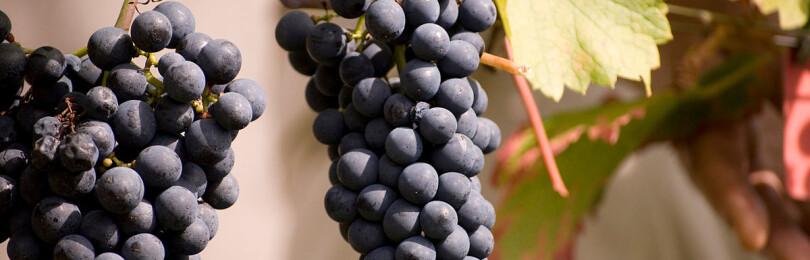 Совиньон вино красное сухое