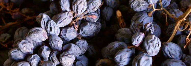 Как сушить виноград