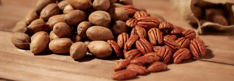 Польза и вред ореха пекан для организма