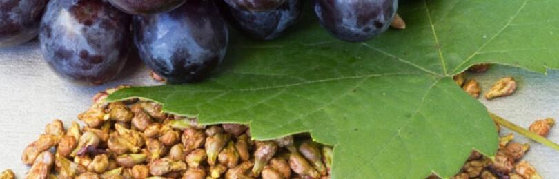 Польза и вред винограда для организма