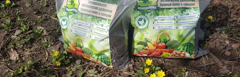Как развести куриный помет для подкормки растений