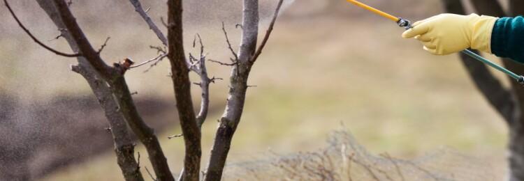 Обработка деревьев весной от болезней и вредителей