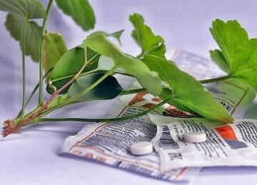 Как развести янтарную кислоту, чтобы полить цветы