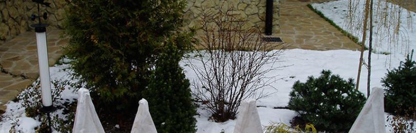 Как укрыть клематис на зиму. Особенности и правила подготовки к зиме