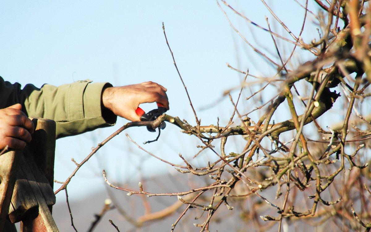 Как сделать из дерево обрезка 108