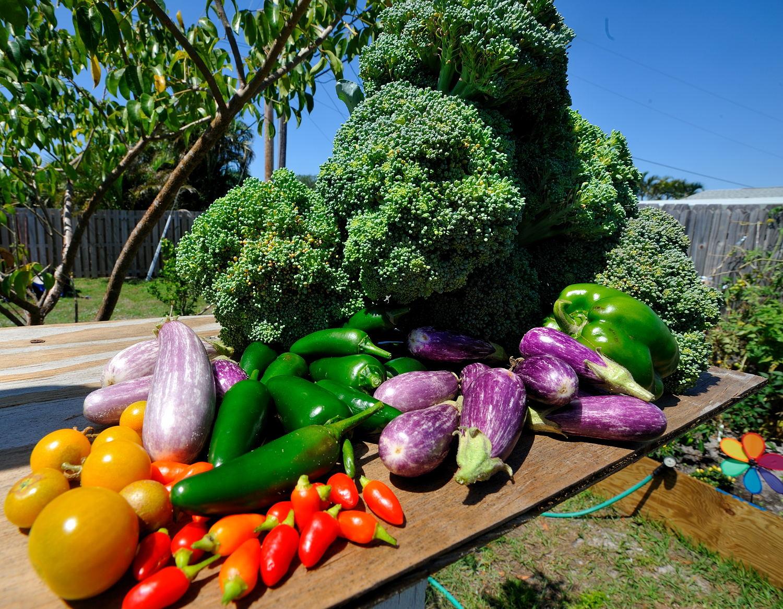 Сорта садовых культур